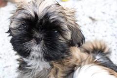 10.puppy_