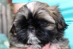 12.puppy_