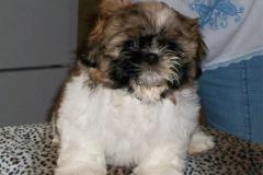 27.puppy_