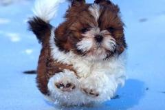 3.puppy_
