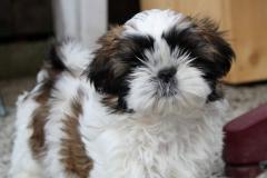 6.puppy_